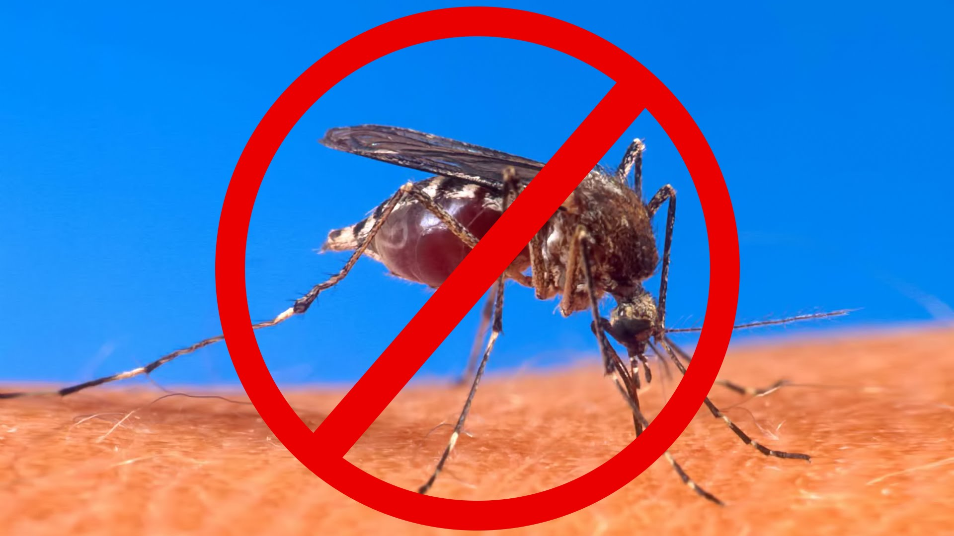 if-you-are-dining-outside-use-a-fan-to-keep-the-mosquitos-away