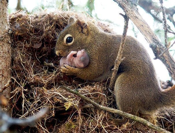 16-squirrels-will-adopt-other-squirrel-babies-if-they-are-abandoned