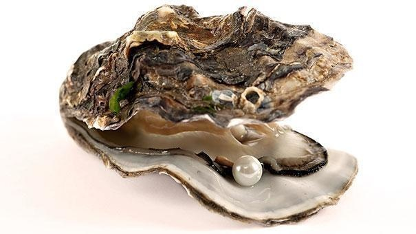 17-oysters-can-change-gender-depending-on-which-is-best-for-mating