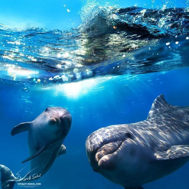 5-dolphins-have-names-for-each-other